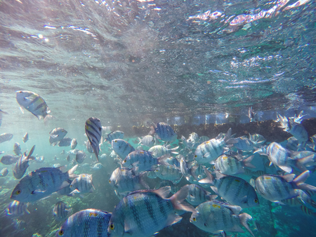 Lots of fish and corals during snorkeling in Sharm el Sheikh, Egypt.