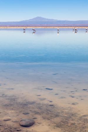 Laguna Chaxa, Atacama Desert, Chile. South America. 写真素材