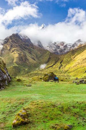 Salkantay Trekking in Peru, South America. 写真素材