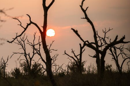 Sunrise in savannah of Africa and Swaziland. Amazing place.