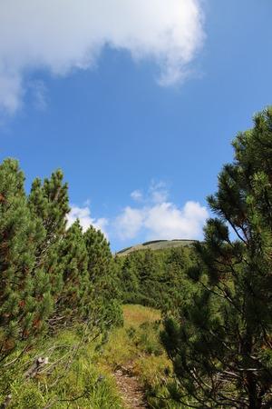 arbre: mountains