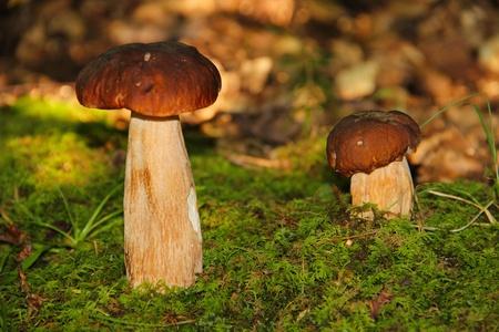 socle: mushroom