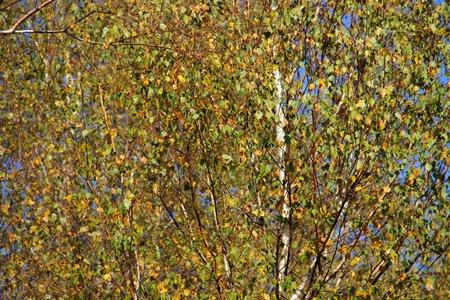 arbre: wood Stock Photo