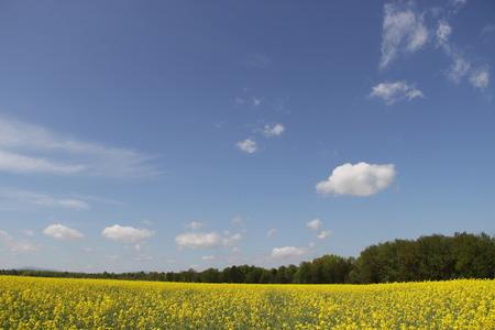 yellow field Stok Fotoğraf - 40057670