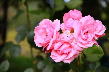 animalitos tiernos: rosa Foto de archivo