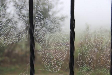 morning dew: cobweb