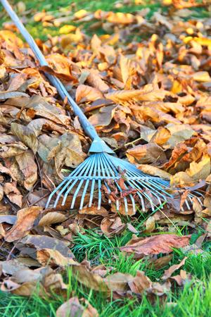 rake: rake cleaning Stock Photo