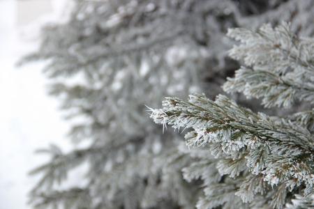 background texture metaphor: frost on pine
