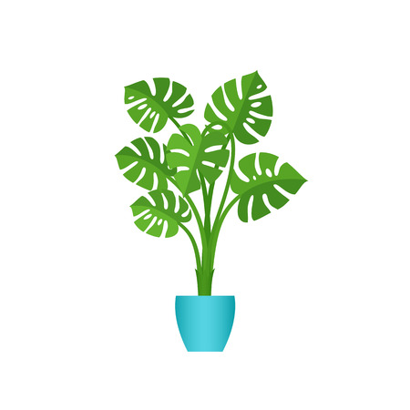 Monstera potted plant. Vector. Indoor flower in pot in flat design isolated on white background. Animated houseplant. Cartoon colorful illustration.