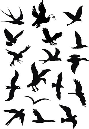 silhouetten van wilde vogels in de vlucht