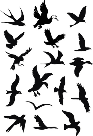 gulls: silhouettes of wild birds in flight