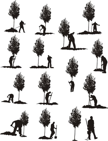 trees services: TREE PLANTING Illustration