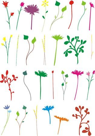 cut flowers: CUT FLOWERS