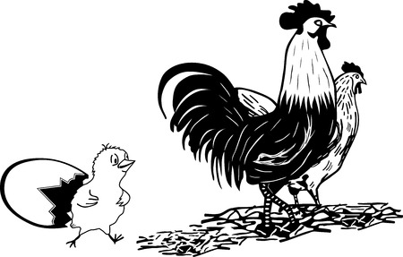chik: ROOSTER, HEN, CHIK