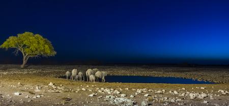 Elephants in the Etosha National Park at sunset, Namibia