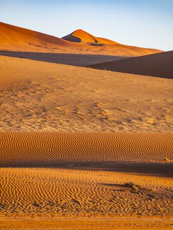 砂丘で、ナミブ国立ウクルフトパ、セスリエム、ナミビア 写真素材