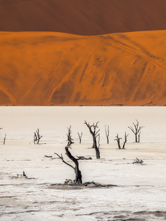 Deadvlei in the Namib Naukluft National Park, Sesriem, Namibia Stock Photo
