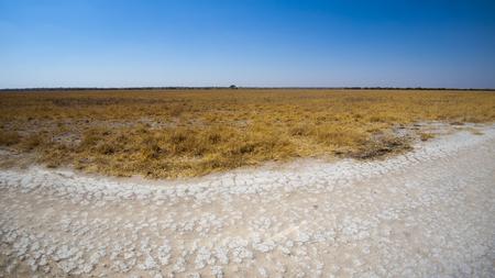 Deception Valley, Central Kalahari Game Reserve, Botswana