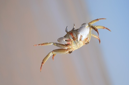crab on beach, southern Africa Stock Photo
