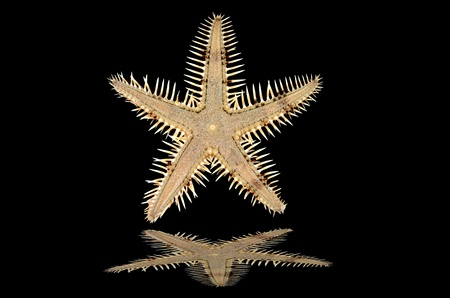 Starfish on a black background with reflection