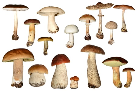 mushrooms collection isolated on white background