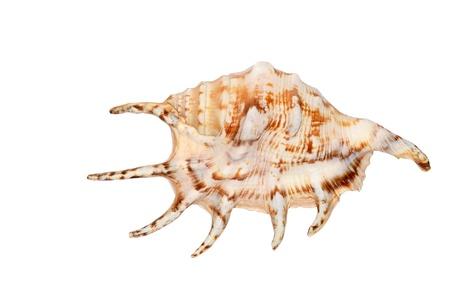 Ocean seashell on a white background Stock Photo