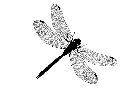 dragonfly  Stock Photo - 10957960