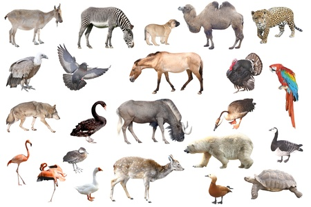 Animals Stock Photo - 10957962