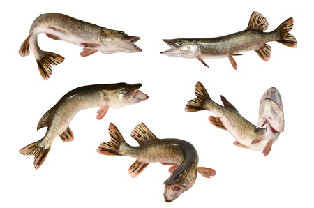 pike fish set Stock Photo