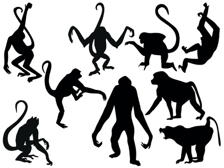 simian: monkeys Illustration