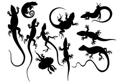salamandre: lézard
