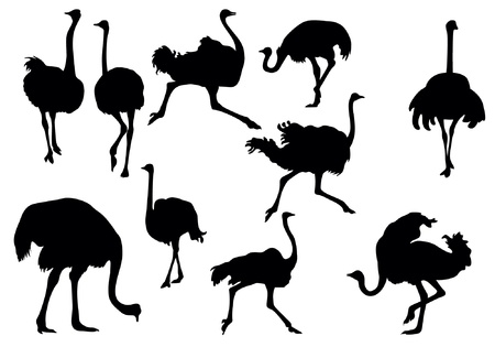 ostrich silhouette collection Illustration
