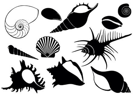 海の貝のイラスト  イラスト・ベクター素材