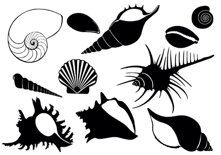 illustration of sea shells
