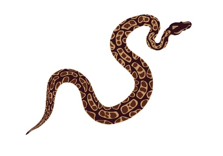 serpiente de cascabel: serpiente Vectores