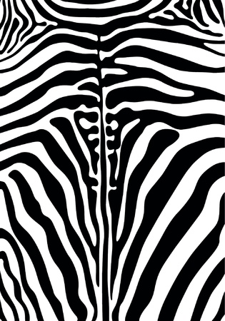 texture of zebra skin black
