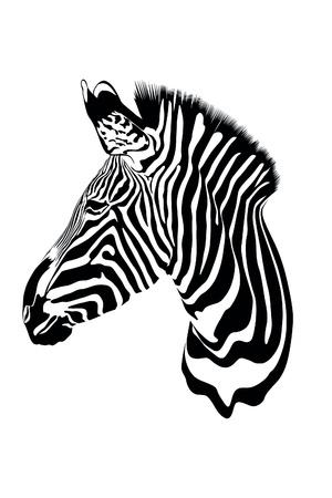 zebra face: zebra