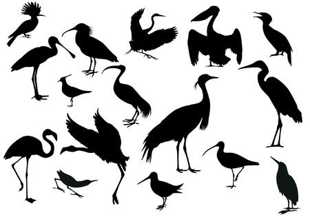 airone: Uccelli Vettoriali