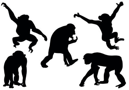 silueta mono: Colecci�n de siluetas de simios Vectores
