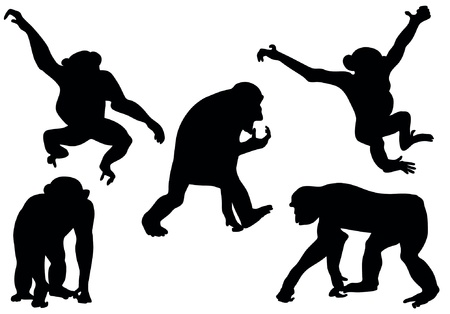 monkey in a tree: Collection of apes silhouettes