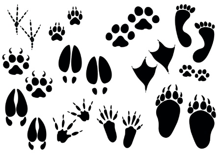 dog paw: Set of paw print