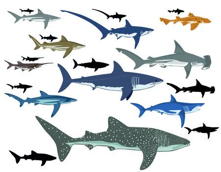 pez martillo: Tiburones, collage