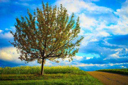 albero della vita: melo sul prato sotto il cielo blu melo vicino prima del raccolto sul campo in Germania