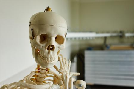 eye socket: Medical skull Head of a medical skeleton Stock Photo