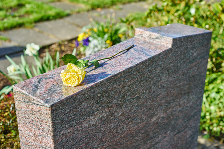 grief at on cemetery  withered yellow rose on gravestone