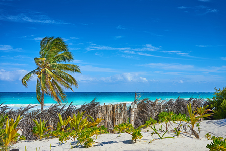 Tropical beach of Tulum in Mexico / Untouched paradise under marvelous coconuttrees / Summer vacation in caribbeans Stock Photo - 76748292
