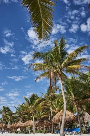 So called Turtle Beach Akumal in Mexico  Caribbean vacation at mexican tropical beach at Quintana Roo