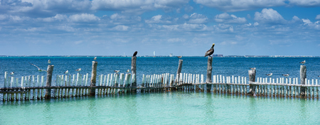 Seabirds looking for fishes / Seagulls and Pelican sitting at keys of Mexican island