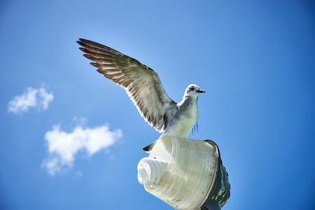 Seagull on a lamp Standard-Bild