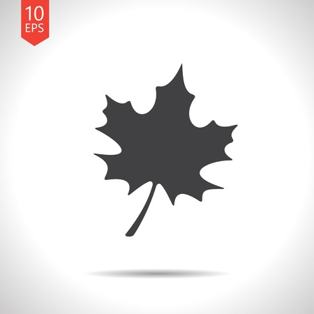 flat leaf: Vector flat  maple  leaf icon isolated on white. Eps10